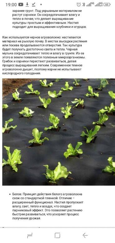 материнская плата для майнинга купить в Кыргызстан: Черное агроволокно для клубники и других растений!!!Если Вы