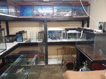 Bakı şəhərində hazir akvariumlar ve sifariwlerde qebul olunur olculerine gore qiymet