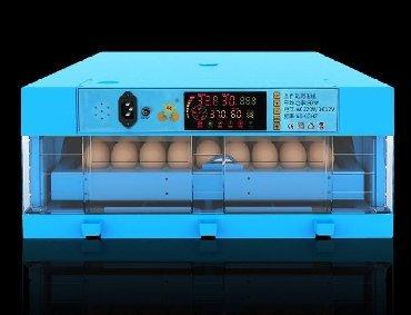 nur çörək zavodu - Azərbaycan: Inkubator inqibator inkibator inqubatorYeni model65 yumurtaliq zavod