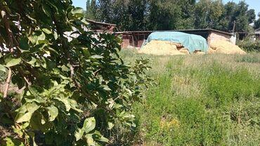 Недвижимость - Буденовка: 8 соток, Для строительства, Собственник, Тех паспорт