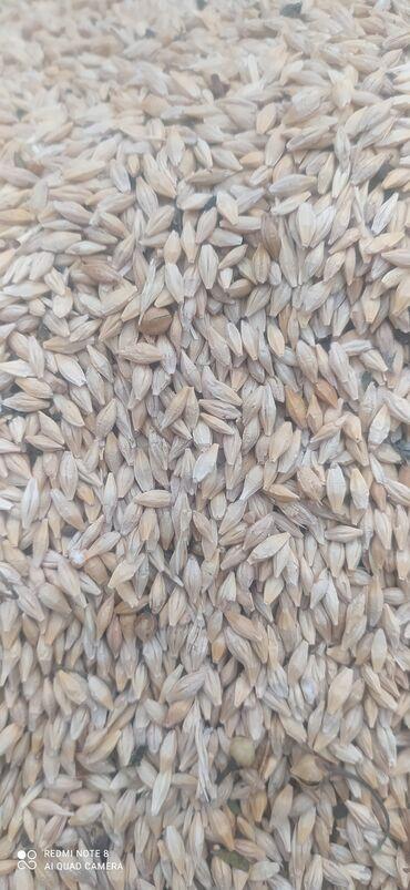 82 объявлений   ЖИВОТНЫЕ: Чистый крупные семена Канадский квенч норма высева 100/150кг