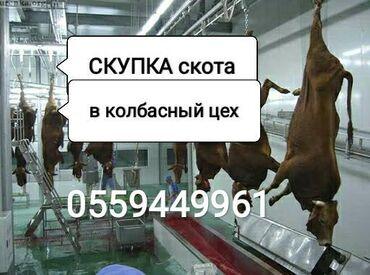 книга гарри поттер купить в Кыргызстан: Скупаем скот в колбасный цехскупаем коровскупаем лошадейскупка в