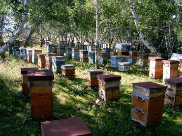 Здравствуйте, товарищи пчеловоды! в Кызыл-Суу