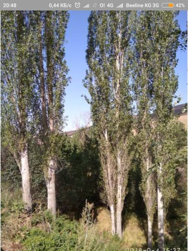 Терек алуучулар болсо чалыныздар в Бишкек