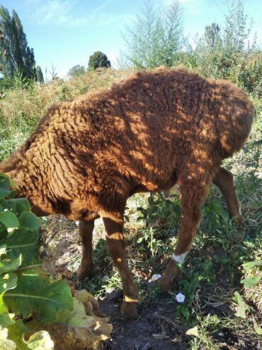 Другие животные - Беловодское: Садовое