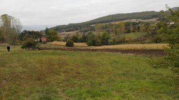Poljoprivredno gazdinstvo sa 200 sadnica lesnika posed od 6 hektara - Zagubica