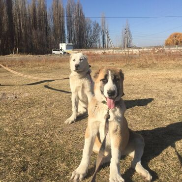 Брусчатка фото цена - Кыргызстан: Происхождение на последней фотографии, 4 месяца цена окончательная