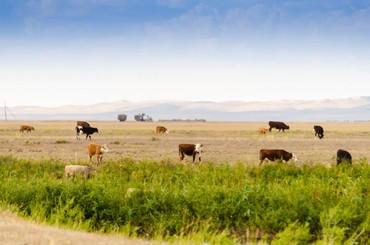 уй було жана тошок сырлары в Кыргызстан: Уй кайтарып анан сааганга малчы керек, Кант шаарына, жатаканасы жана