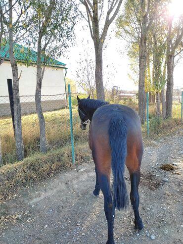 35 объявлений   ЖИВОТНЫЕ: Продаю   Конь (самец), Жеребец   Полукровка   Конный спорт   Племенные