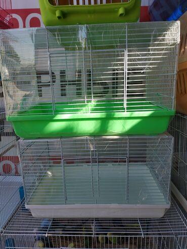 Куплю клетки для грызунов.Для Декоративных кроликов. От 500с -700сом