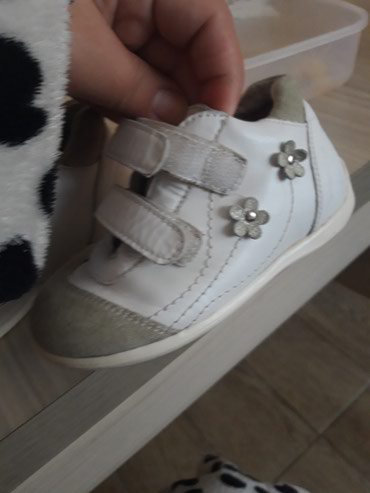 Pavle cipelice ocuvane - Batajnica
