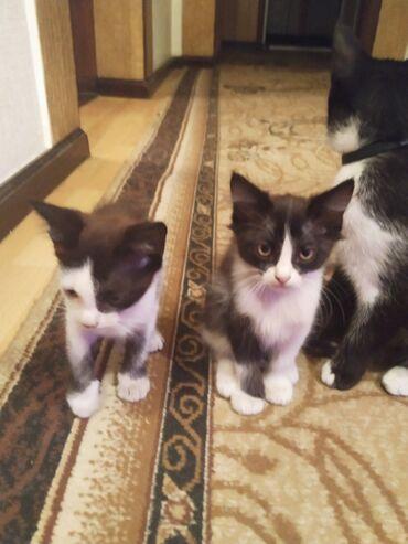 73 объявлений   ЖИВОТНЫЕ: Отдам в хорошие руки не различимую парочку хороших игровых котов