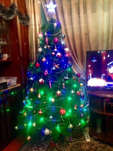 елочка в Кыргызстан: Продам пышную елочку(без игрушек)высота 1,5 метра,в хорошем