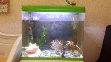 Продаю аквариум!! 100 литров, уже с грунтом и разноцветными камнями. С