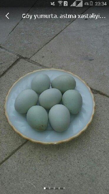 Göy yumurta (araukana toyuğu) açıq mavi, yaşımtıl yumurtadır. Astma xə