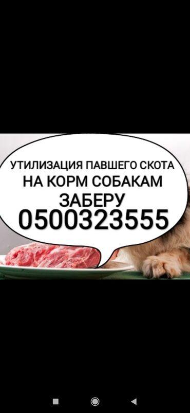 часы juicy couture в Кыргызстан: Самовывоз