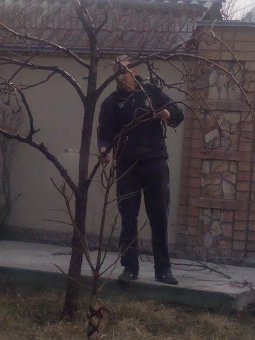 Обработка и обрезка хвойных и в Бишкек