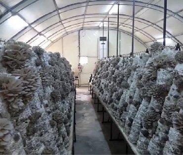 титан гель titan gel для мужчин в Кыргызстан: Грибные камеры. Парники. Строительство места для выращивания грибов