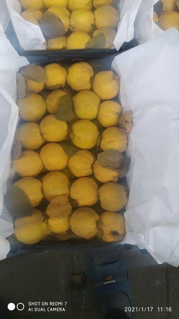 Ev və bağ - Navahı: Heyva satilir topdan satilir kq 0.70. 2 ton maldi. hamsin alana asagi