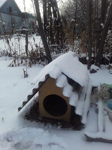 Домик кж - Кыргызстан: Домик для собаку