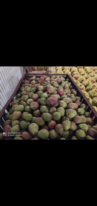 Овощи, фрукты - Кыргызстан: Продаю отборную грушу лесная красавица 3.5 тоннТалгарка 2 тонны