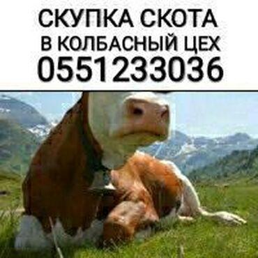 Скупаем скот на колбасу в любом виде и упитанности