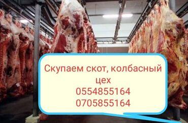 рубщик мяса в Кыргызстан: Скупка скоты на мясо и вынужденный забой в колбасный цех мы работаем