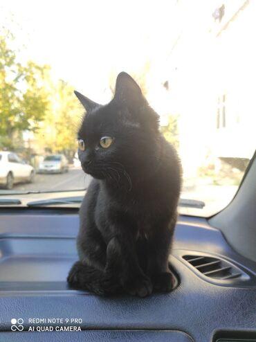Здравствуйте, отдаю котенка исключительно ответственным людям !По