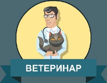 """В частную поликлинику """"Webmedi"""" нужны ветеринары  в Бишкек"""