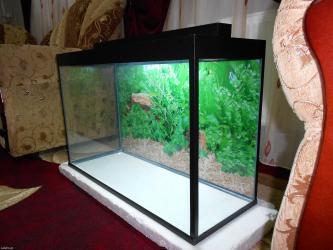 Bakı şəhərində Teze akvarium topdan qiymete  120 litrelik  6 mml  wuwenin qalinliqi