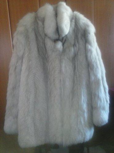 Krzneni kaputi - Novi Sad: Bunda novo polarna lisica  kupljena u nemackoj