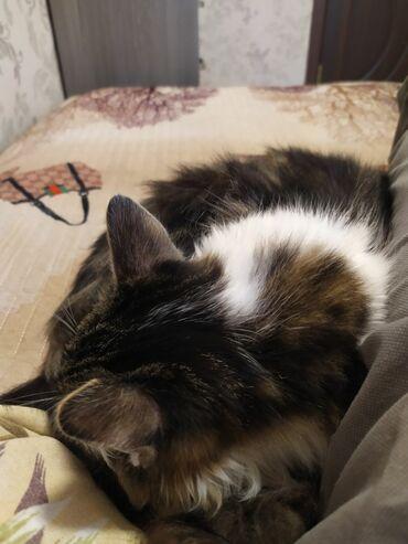 Коты - Ош: Купим котик