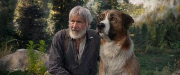 породистые щенки в дар в Кыргызстан: Возьму даром породистую собаку или щенка в хорошие руки для дома если