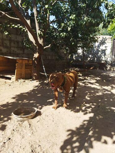 Животные - Буденовка: Собаки