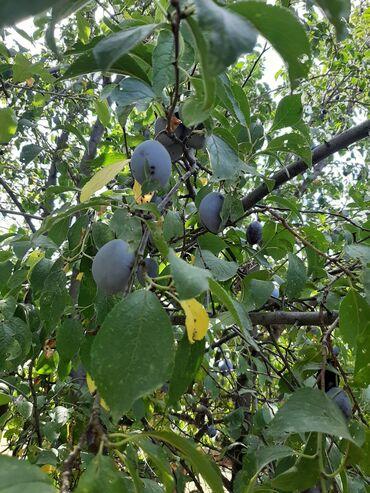 21 объявлений: Овощи, фрукты