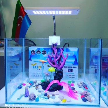 bmw-1-серия-114d-mt - Azərbaycan: Akvarium satılır.KARDİNAL akvarium merkezi. Hər növ akvarium və