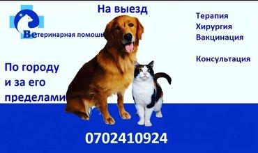 Ветеринарный врач . Ветеринарная в Бишкек