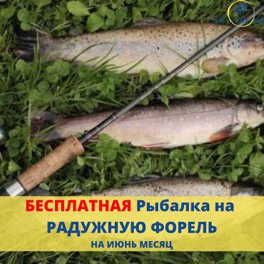 Рыбалка! Организация рыбалки В Сокулуке, Чон Кемин, Токмаке – отдых и
