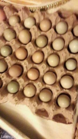 Bakı şəhərində qirqovul yumurtası satıram tam mayalı3 manat
