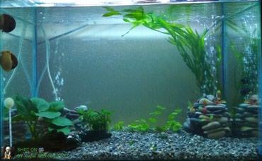 Sumqayıt şəhərində Hazir icerisinin dasi tebii bitgi filtir birsozle tam ful akvarium