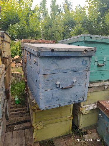 инкубатор-для-яиц-купить в Кыргызстан: Срочно!!!2этажные ящики не гнилые без дыр и прочего. Есть около