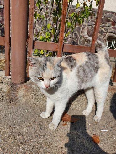 88 объявлений   ЖИВОТНЫЕ: Кошечка уже почти 2 недели сидит на углу у дороги! Видно что была дома