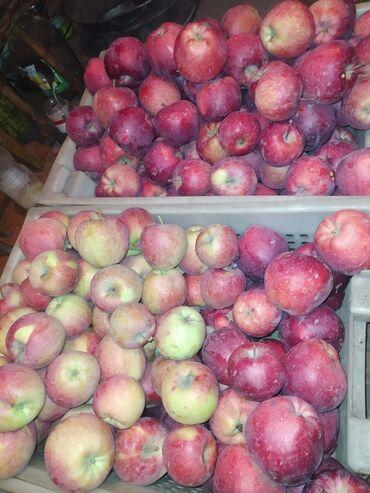 продам дом недорого in Кыргызстан   ПРОДАЖА ДОМОВ: Продаем домашние яблоки с дерева  Превосходные недорого