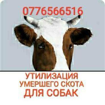 Квартира сокулук - Кыргызстан: ЗАБЕРУ ДЛЯ СОБАК