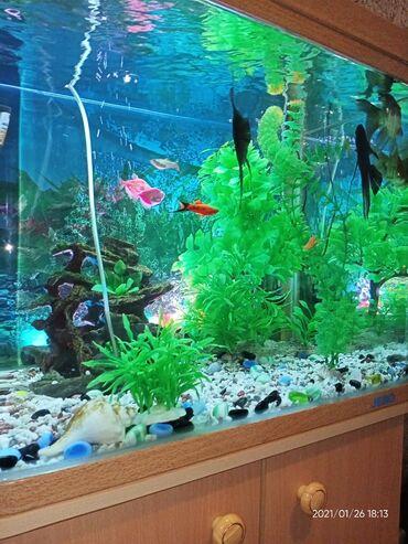 эмблема манас в Кыргызстан: Аквариум Продаётся аквариум на 120 литров вместе с тумбой за 15 000