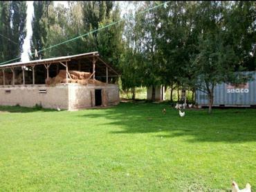 продам дом из контейнера в Кыргызстан: Продам Дом 50 кв. м, 3 комнаты