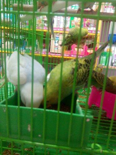 Попугаи разных окрасов и пород, разные в Сокулук