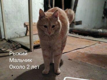 Ищем добрые руки этим милым котикам, они живут в подвале, их кормят и