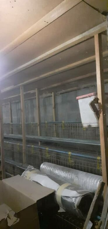 девушка на ночь цена in Кыргызстан | ФУТБОЛКИ: Кормушки на 1000 кур в одну.кормушку-клетку 12 штук кур вмещаются