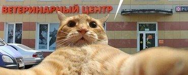 требуются ветеринар в  ветеринарный центр HULU в Бишкек